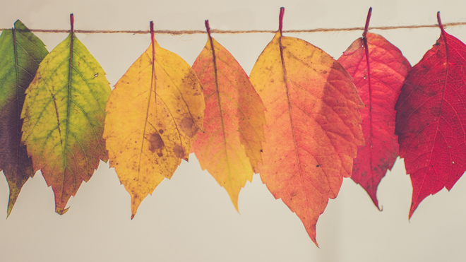 fall_leaves_hanging